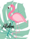 Nette rosa Flamingo-Sommer-Hintergrund-Vektor-Illustration Stockbilder