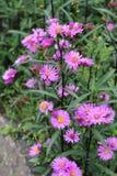 Nette rosafarbene Blume lizenzfreie stockfotografie