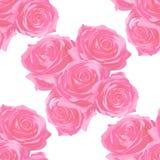 nette Rosen auf empfindlichem Hintergrund stockbilder