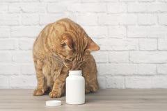 Nette rote Katze, die zu einem offenen Pillenkasten neugierig schaut stockfotos