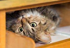 Nette rote Katze legt im Regal mit einem Notizbuch Stockbild