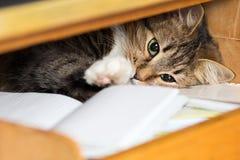 Nette rote Katze legt im Regal mit einem Notizbuch Stockfotografie