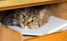 Nette rote Katze legt im Regal mit einem Notizbuch Lizenzfreies Stockfoto