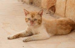 Nette rote obdachlose Katze legt auf die Spur Lizenzfreies Stockfoto