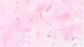 Nette Sakura Blossom Isolated Vector Zarter fliegender Blumenblatt-Hochzeits-Entwurf Japanischen Orientale-Blumen Valentine Mothe stock abbildung