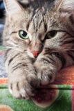 Nette schöne entspannende Katze Stockbild