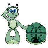 Nette Schildkröte Stockfoto