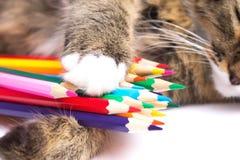 nette Schlafenkatze mit farbigen Bleistiften Stockfotos