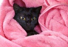 Nette schwarze feuchte Katze nach einem Bad Lizenzfreie Stockfotografie