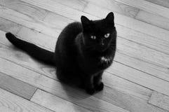 Nette schwarze Katze Lizenzfreie Stockfotos