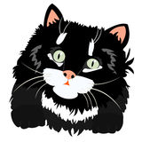Nette schwarze Miezekatze auf Weiß Stockbilder