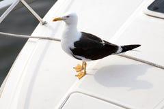 Nette Seemöwe, die auf einem Motorboot stillsteht Stockfotos