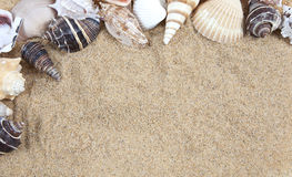 Nette Seeshells auf dem sandigen Strand stockfotos