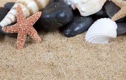 Nette Seeshells auf dem sandigen Strand lizenzfreies stockfoto