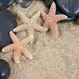Nette Seeshells auf dem sandigen Strand stockfotografie