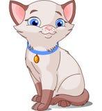 Nette siamesische Katze Stockbild