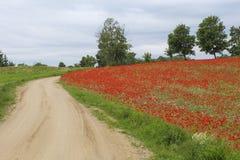 Nette Sommerzeit-Rotmohnblumen Stockfotos