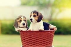 Nette Spürhunde Lizenzfreie Stockfotografie