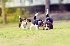 Nette Spürhunde Stockfotografie