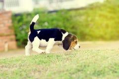 Nette Spürhunde Lizenzfreie Stockfotos