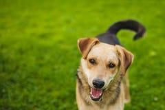 Nette Spürhunde, die im Hinterhof spielen Hund mit gewidmeten Augen Stockbilder