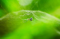 Nette Spinne im Netz lizenzfreie stockfotografie
