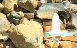Nette stolze Eidechse auf Felsen nahe Brunnen Aruba-Insel Stockfoto