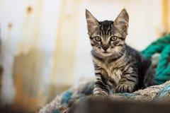 Nette Tabby Cat auf alter hölzerner Palette und abgenutzten Marine-Seilen Stockfotos