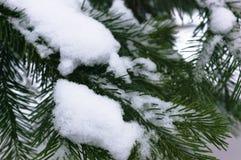 Nette takken onder GLB van sneeuw stock foto's