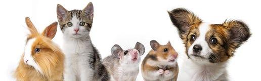 Nette Tiere stockbilder