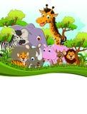 Nette Tierkarikatur der wild lebenden Tiere mit Waldhintergrund Stockfoto