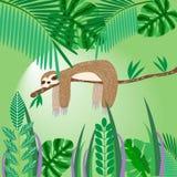 Nette Trägheit, die auf einem Baum im Dschungel, Babykartenvektor IL schläft Lizenzfreies Stockfoto