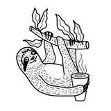 Nette Trägheit, die auf einem Baumast mit einer Schale heißem Kaffee nahging ist Hand gezeichnet, Gekritzelart-Vektorillustration stockbilder