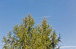 Nette treetop met vliegtuig en sleep Stock Afbeeldingen