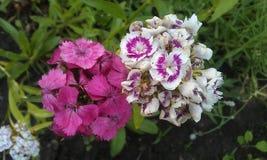nette und Schönheitsblume Stockfotos