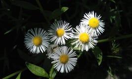 nette und Schönheitsblume Stockbild