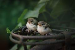 Nette Vögel stockfoto