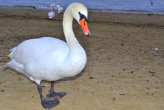 Nette Vogelnahaufnahme Lizenzfreie Stockfotografie
