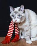 Nette weiße Katze im gestreiften Schal, der auf dem Boden traurig schaut sitzt stockfoto