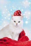 Nette weiße persische Katze mit Sankt-Hut Stockbild