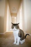 Nette weiche Katze stockbild