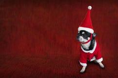 Nette Weihnachtskarte mit einem Hund in Sankt-` s Kostüm Stockfotografie