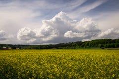 Nette Wolken Stockbild