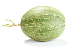 Netted Melon Royalty Free Stock Image