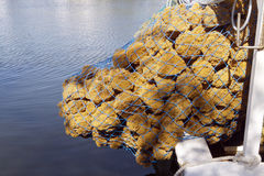 Netted Sea Sponges On a Boat Royalty Free Stock Photos