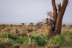 Netter Affe auf dem Baum Stockfotografie