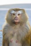 Netter Affe, der auf dem Straßenhintergrund sitzt Stockfoto