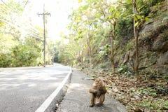 Netter Affe, der auf Straße in Thailand sitzt Stockfotografie