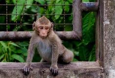 Netter Affe, der auf Wand klettert Lizenzfreies Stockbild