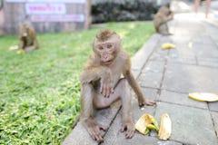 Netter Affe, der Banane auf Grashintergrund im Park isst Lizenzfreie Stockbilder